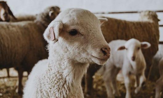 portada-ovejas-reto-somos-lo-que-tejemos